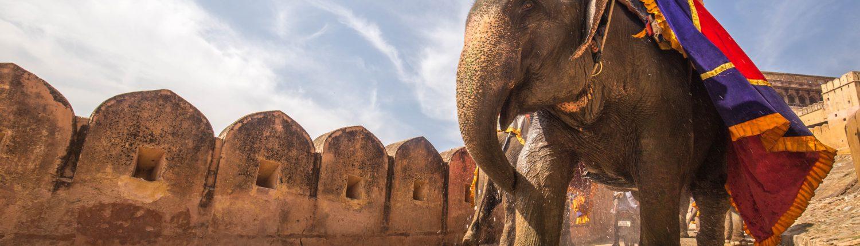 Elephant en Inde par C Rayban